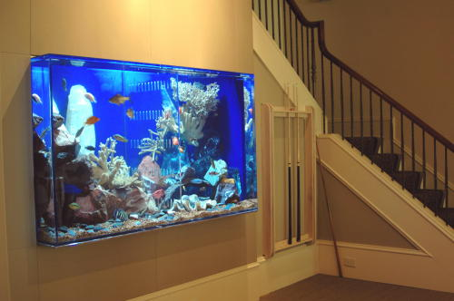Just add water 39 s spectacular aquatic concepts for Fish tank in wall